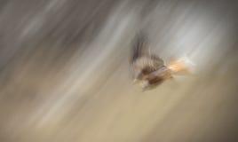 kani nurkowa czerwień Zdjęcie Royalty Free