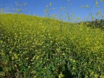 Kani wzgórza dzikich kwiatów Aliso Viejo CA usa Obraz Royalty Free