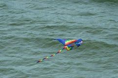 Kania lata nad oceanem Fotografia Stock