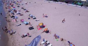 Kania nad plażą