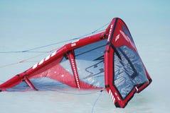 Kania Odpoczywa w wodzie Po Kiteboarding wpadki fotografia royalty free