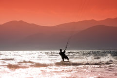 kania surfing Obrazy Stock