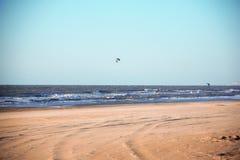 Kania surfing zdjęcie royalty free