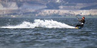 Kania surfingowiec zdjęcia royalty free