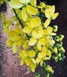Kanikonna, une fleur Photo stock