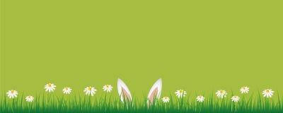 Kaninöron i grön äng med banret för blommor för vit tusensköna det gröna med kopieringsutrymme royaltyfri illustrationer