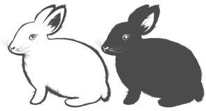 Kanin Arkivbild