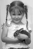 kanin royaltyfri bild