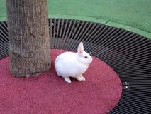 kanin Royaltyfri Fotografi
