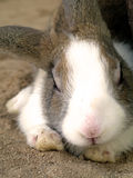 kanin arkivbilder