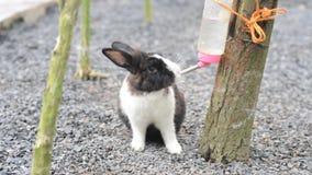kanin stock video