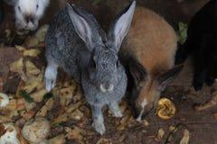 kanin 2 Royaltyfri Foto