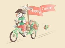 Kanin-chaufför av påskägg Royaltyfri Foto