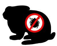 kanin förbjuden tick Arkivfoto