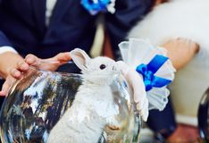 Kanin i akvariet Arkivfoton
