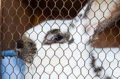 Kanin i en bur Arkivbild