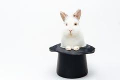 Kanin i en hatt Arkivfoto