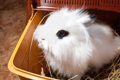 Kanin i en korg Royaltyfri Bild