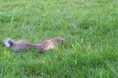 Kanin i gräs Royaltyfria Bilder