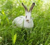 Kanin i gräset Arkivbild