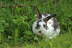 Kanin i gräset royaltyfria foton