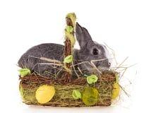 Kanin i korg på vit bakgrund royaltyfria bilder