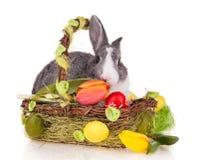 Kanin i korg på vit bakgrund arkivfoto