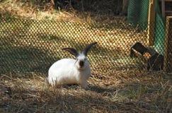 Kanin i paddocken Arkivfoton