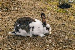 Kanin i parkera arkivfoton