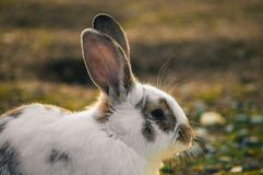 Kanin i parkera arkivbilder