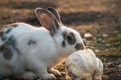 Kanin i parkera royaltyfri bild
