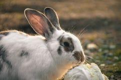 Kanin i parkera royaltyfria bilder