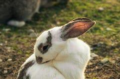 Kanin i parkera royaltyfri fotografi
