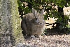 Kanin i skogen Arkivfoto