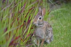 Kanin i trädgården Arkivfoton