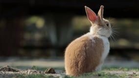 Kanin kör bort lager videofilmer