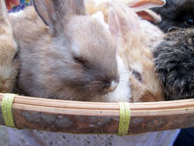 Kanin liten lott som säljs på marknaden Arkivbilder