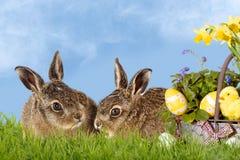 kanin lyckliga easter Arkivbilder