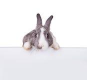 Kanin med det tomma arket på vit bakgrund royaltyfria foton