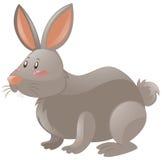 Kanin med grå färgpäls vektor illustrationer