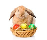 Kanin med korgeaster ägg bakgrund isolerad white Royaltyfria Foton