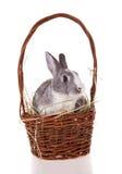 Kanin med korgen på vit bakgrund arkivbild