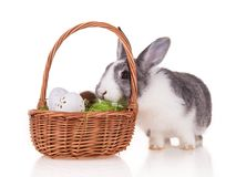 Kanin med korgen på vit bakgrund royaltyfria foton
