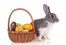 Kanin med korgen på vit bakgrund royaltyfria bilder