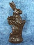 Kanin med korglinen up royaltyfri foto