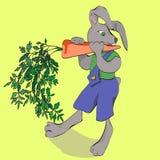 Kanin med moroten Arkivfoto