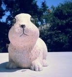 Kanin och biet Royaltyfri Fotografi