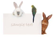 Kanin och budgie Arkivfoto