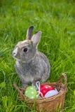 Kanin och easter ägg Royaltyfri Foto