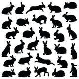 Kanin och hare Fotografering för Bildbyråer
